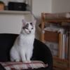 cat_527 里親になりました。