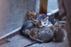 cat_377 ネムネム