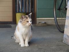 cat_465 おじいちゃん、まだかにゃ