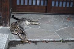 cat_370 にゃ!