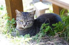 cat_550