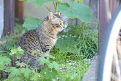 cat_29