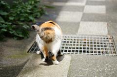 cat_371 好奇心