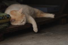 cat_358 脱力