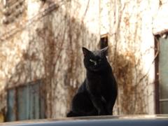 cat_466 冬の黒猫