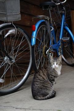 cat_552 美青年
