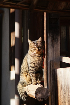 cat_155 また来たにゃ