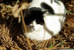 cat_178 枯れ草ベッド