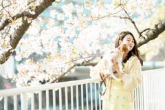 静かな桜 3