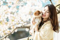 静かな桜 4