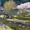 桜と笠松橋