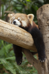はぁ、疲れた…