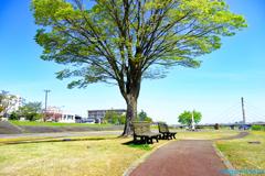晴れた日の思い出の樹の下で