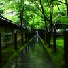 路。禅林寺