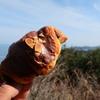 友ヶ島散策。おやつ1個目はチョコクロワッサン
