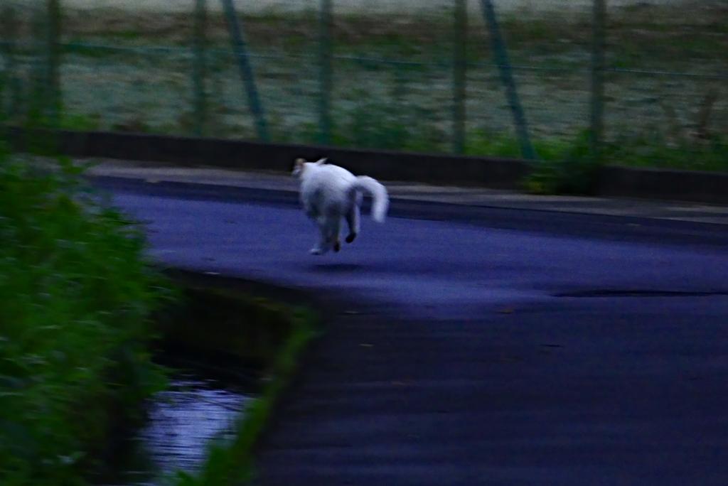 目が合って、猫・大慌て…こちらもシャッター押すのに大慌て