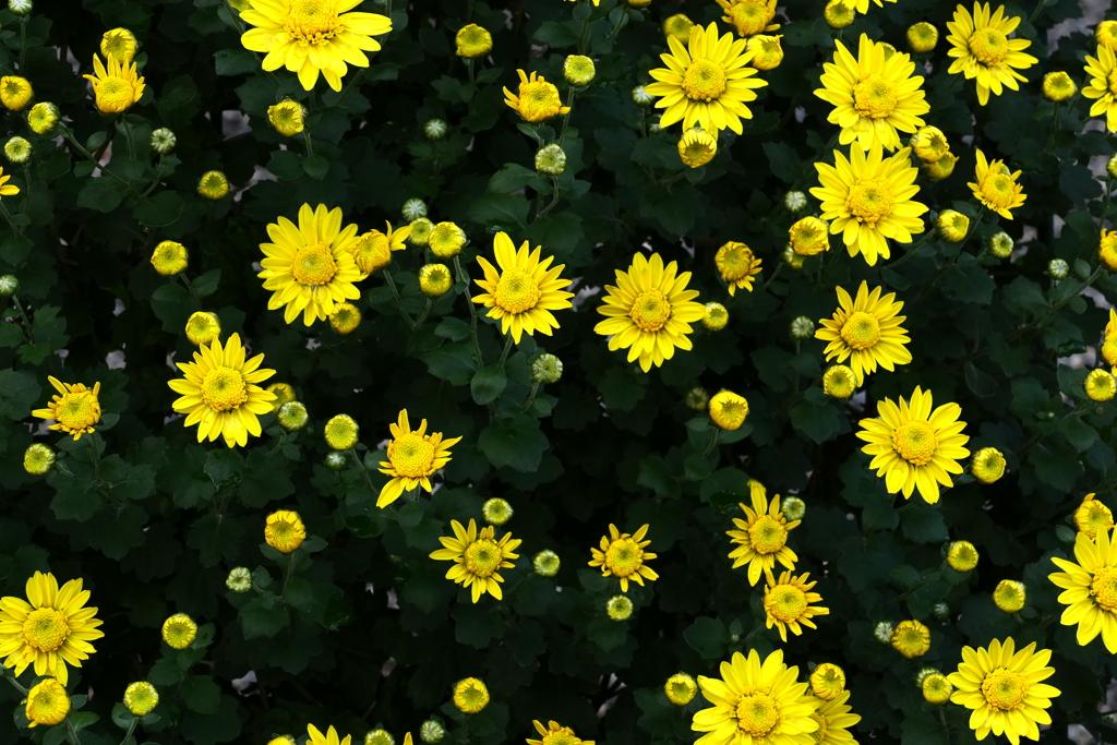 小花は黄色