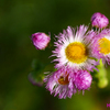 野花。繊細