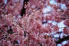 ピンクが鮮やかだったので