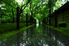 雨足強まりました。京都