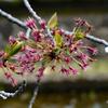みごとに葉桜