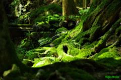 森はうねり