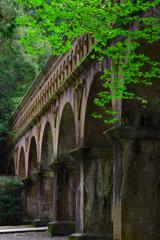 8月31日の南禅寺。緑鮮やか