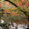 池に照らされる紅葉