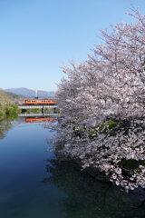 桜とタラコの鏡