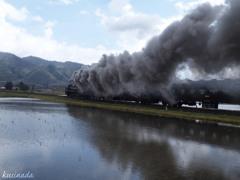 水田を渡る煙