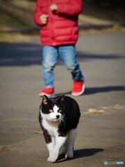 ネコと子供