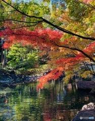 2019 大田黒公園の紅葉