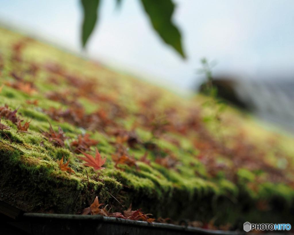 屋根の苔と落ち葉
