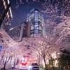 桜並木から見る六本木ヒルズ