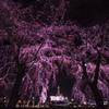 夜の枝垂れ桜と氷川丸