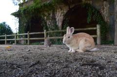 毒ガス島にて廃墟とウサギ