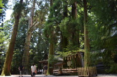 高千穂神社その4夫婦杉