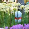 石仏と白い彼岸花