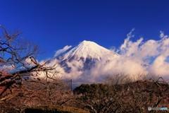 雪化粧の富士、雲を纏って…。