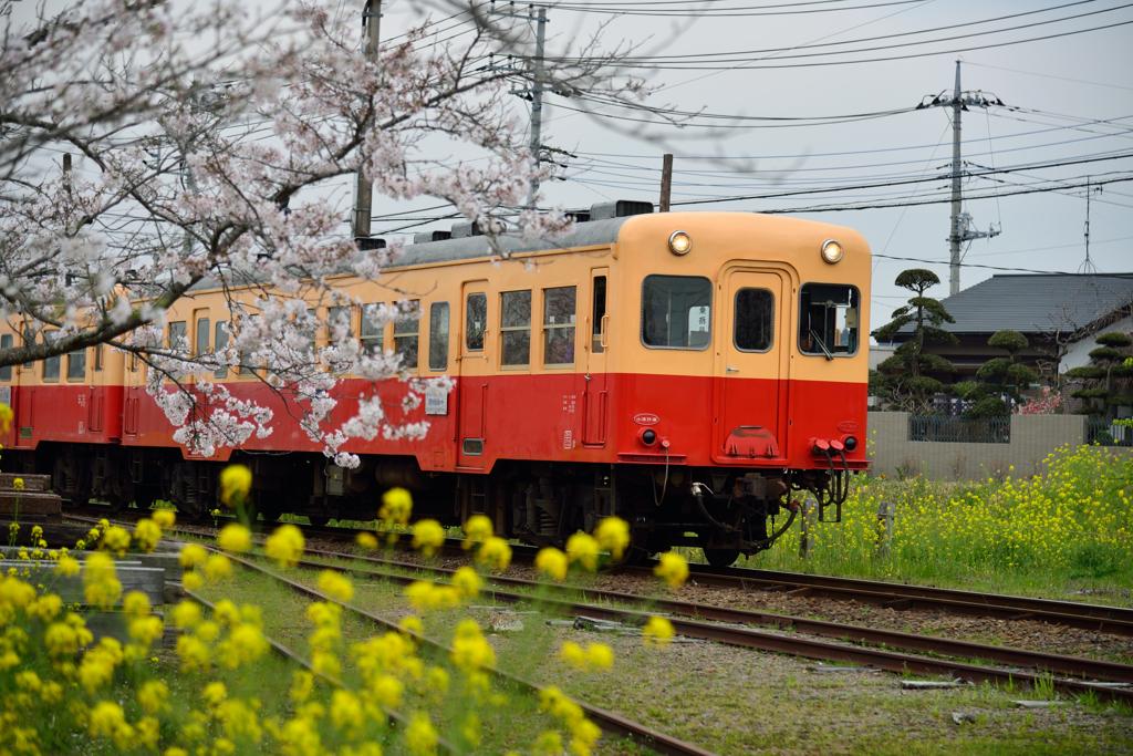 桜キハ200系②