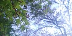 川越市伊佐沼公園の桜⑨