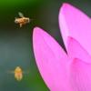 花粉あつめ