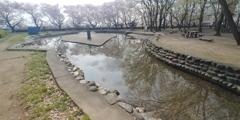 川越市伊佐沼公園の桜㉑