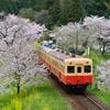 桜キハ200系④