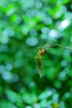 セミと緑の魔法の時間_1