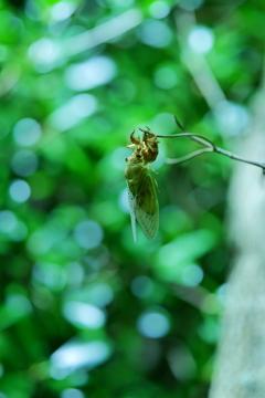 セミと緑の魔法の時間_2