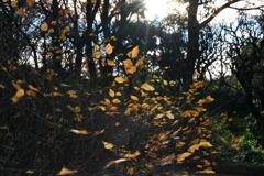 日差しの色と葉の色と