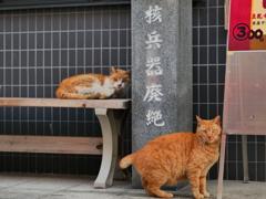 核兵器廃絶猫の友人が撮影者を値踏み