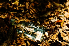 枯れ葉のベッド