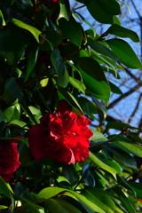 緑の街に赤い花びら